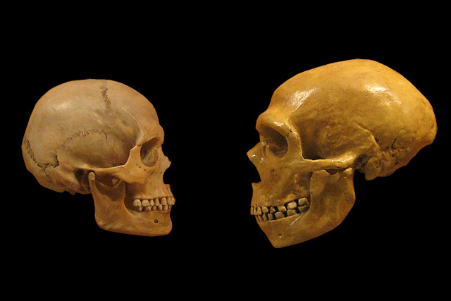 How differences in the genetic 'instruction booklet' between humans and Neanderthals influenced traits