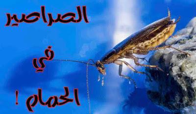 تفسير حلم الصراصير في الحمام بالتفصيل