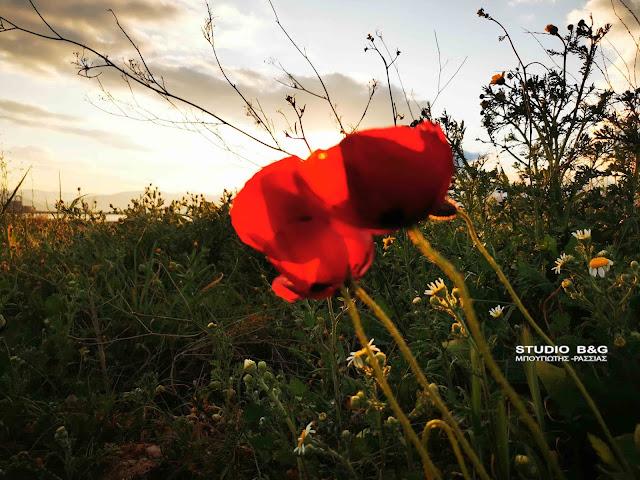 """Άνοιξη: Η φύση """"ξυπνά"""" στην Αργολίδα και μοιάζει με καμβά ζωγραφικής"""