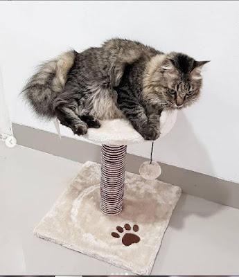 panduan merawat kucing bagi pemula