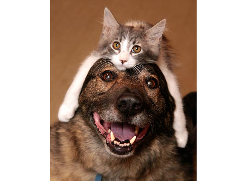 Raw food for Cats and Dogs