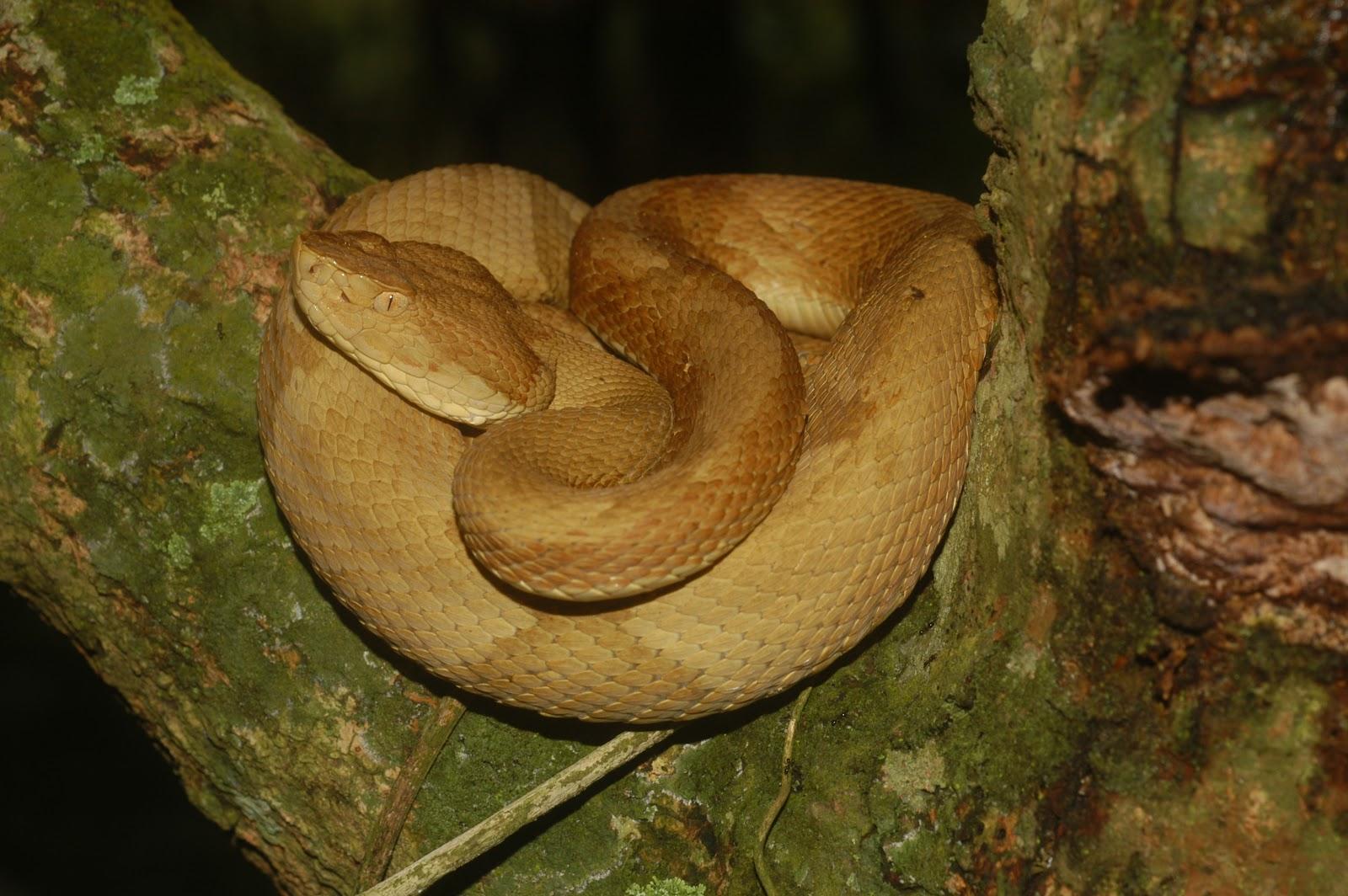 golden snake island