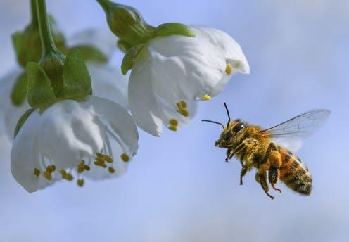 Πρέπει να παραδειγματιζόμαστε από τη δουλειά που κάνουν οι μέλισσες