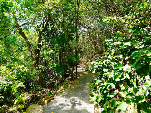 nature trails, nature, beauty, reopening, good energy, paya bay resort