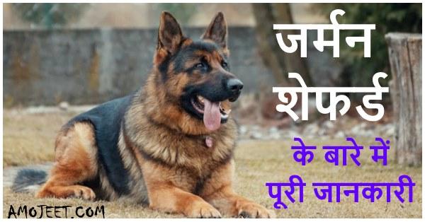 jarman-safed-dog-photo-ki-hindi-me-jankari