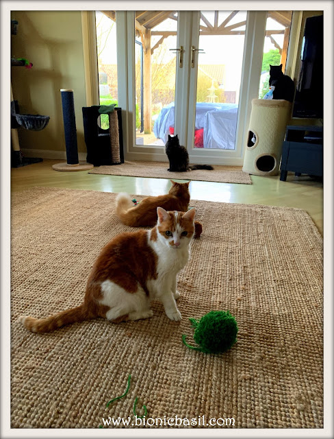 Four Cats, Two Pom Poms and One Snowman©BionicBasil® Sunday Selfies
