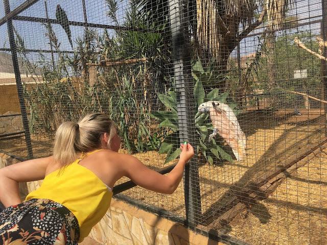 Monkey-park-los-cristianos-feeding-parrot