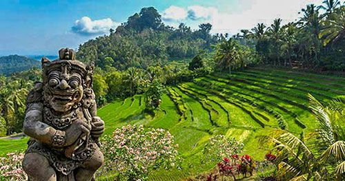 Bukit Jambul Rice Terraces - Restaurant for Lunch - Full Day Besakih Temple Tour Package