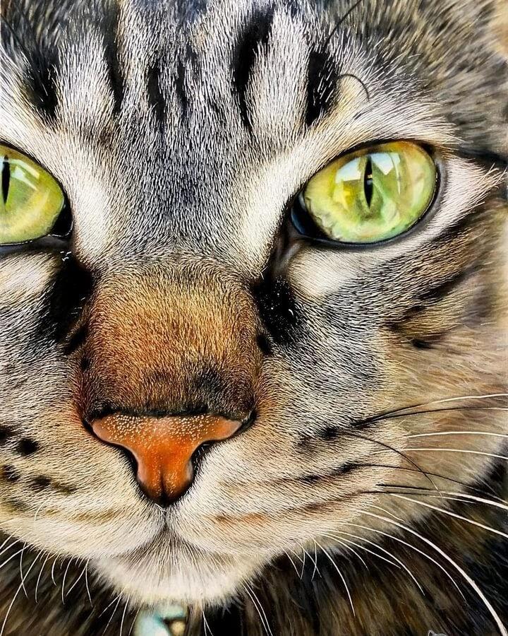 06-Cat-Closeup-Haruki-Kudo-www-designstack-co