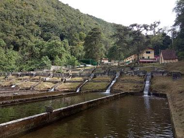 Reactivan producción de trucha en estaciones La Mucuy y Fabricio Ojeda de Mérida