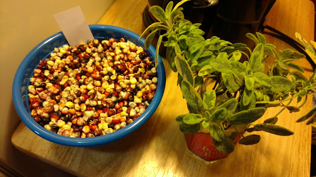 Painted Mountain Corn, shelled (left), Golden Sage, cuttings (right)