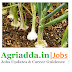 SRF recruitment-All India Network Research Project On Onion & Garlic
