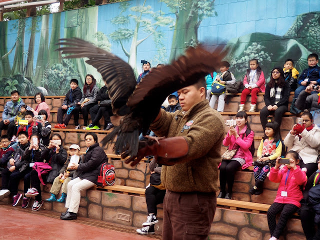 Vulture in the bird show at Ocean Park, Hong Kong