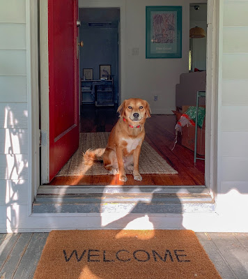 A brown dog is sitting in a doorway with a welcome mat on the floor directly in front of them