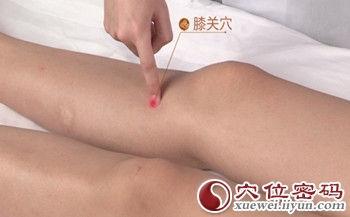 膝關穴位 | 膝關穴痛位置 - 穴道按摩經絡圖解 | Source:xueweitu.iiyun.com