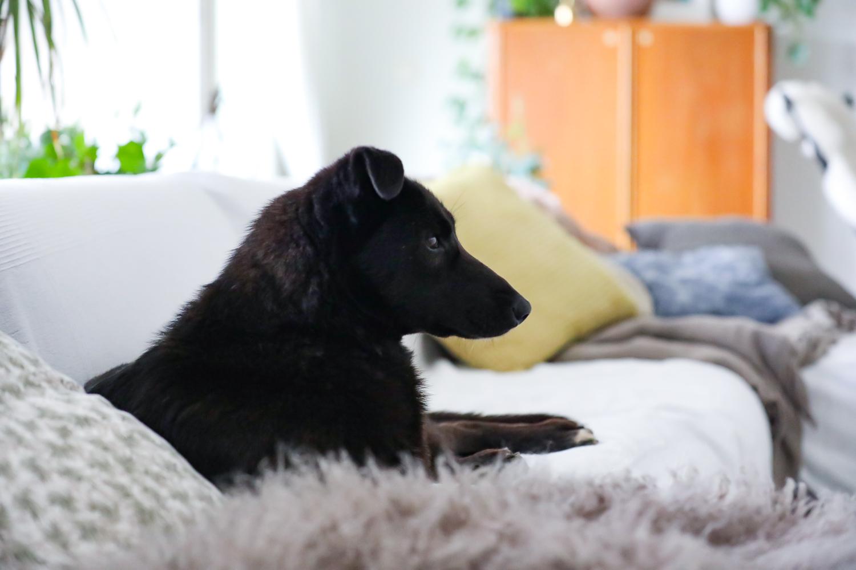 shadi-viipurin-koirat-100outdoor