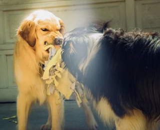 Pertolongan Pertama Saat Digigit Anjing Agar Tidak Terinfeksi Rabies