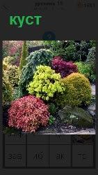 На лужайке растут красивые кусты, оформленные в клумбу и обрамленные камнями по периметру