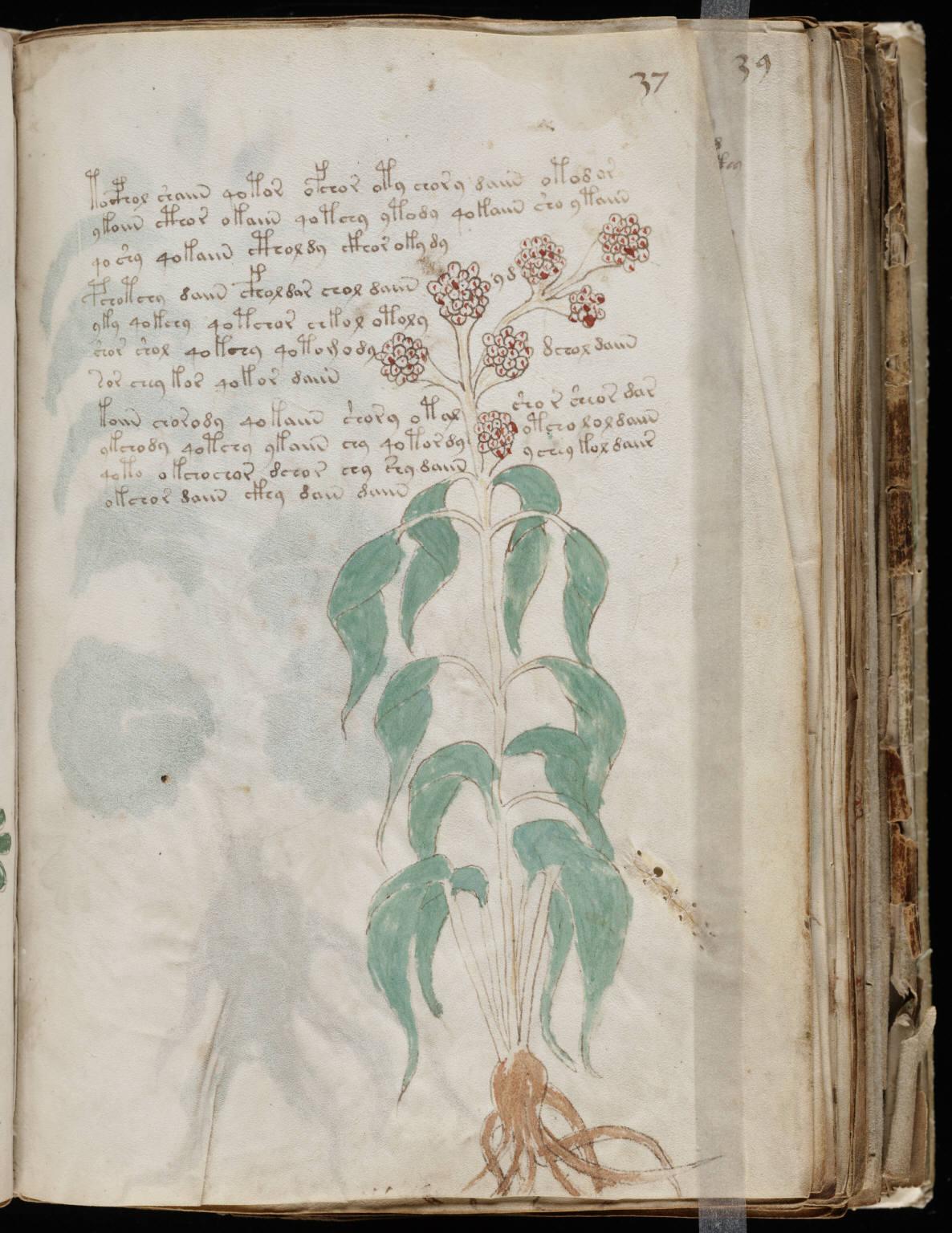 manuscrito071