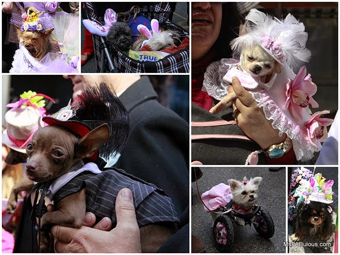 dog costumes easter
