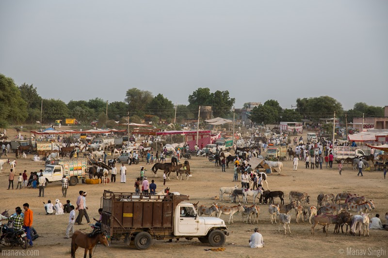 Donkey Fair - Ghati Karolan, Surrounding temple of Goddess Khalkani, Near Luniawas village, Approx 20km from Jaipur, Rajasthan.  Asia's biggest Donkey Fair or cattle fair near Jaipur.