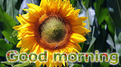 Rose good morning photo