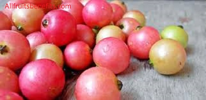 Benefits of Jamaica cherry