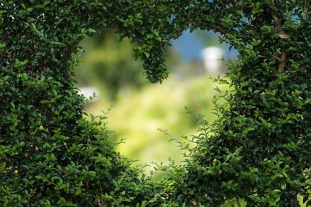 rumput yang berbentuk love