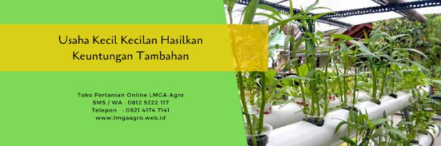 usaha kecil kecilan,usaha kecil,usaha pertanian,pertanian,lmga agro