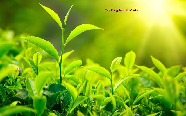 Tea Polyphenols Market