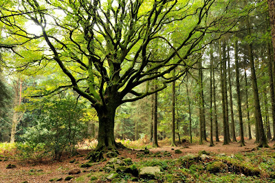 bosco sacro di Brocéliande