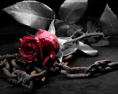 Resultado de imagem para rosas com espinhos