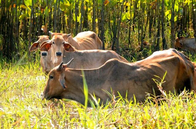 Kaw Frans-Guyana, moerassen Frans-Guyana, dieren Frans-Guyana