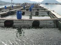 Mengulas Lebih Jelas Berbagai Manfaat & Kegunaan Waring Ikan