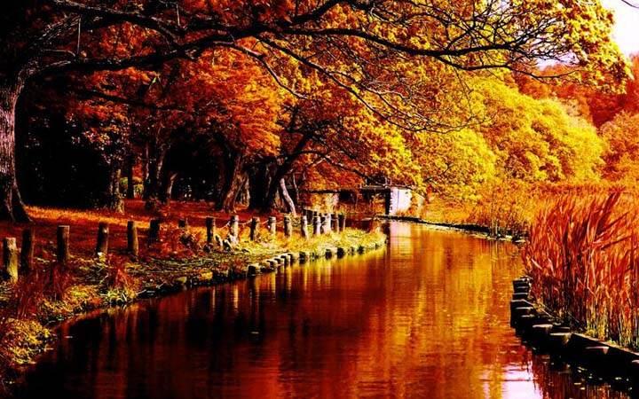sonbahar resiminde mevsim rengi