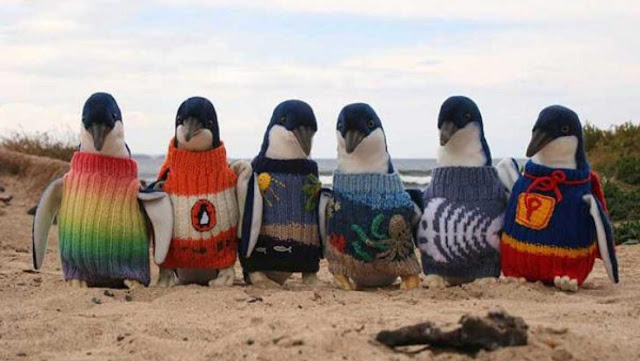 Tiny Blue plush Penguins with adorable little sweaters.No Kicking Penguins and other stories about penguins. marchmatron.com