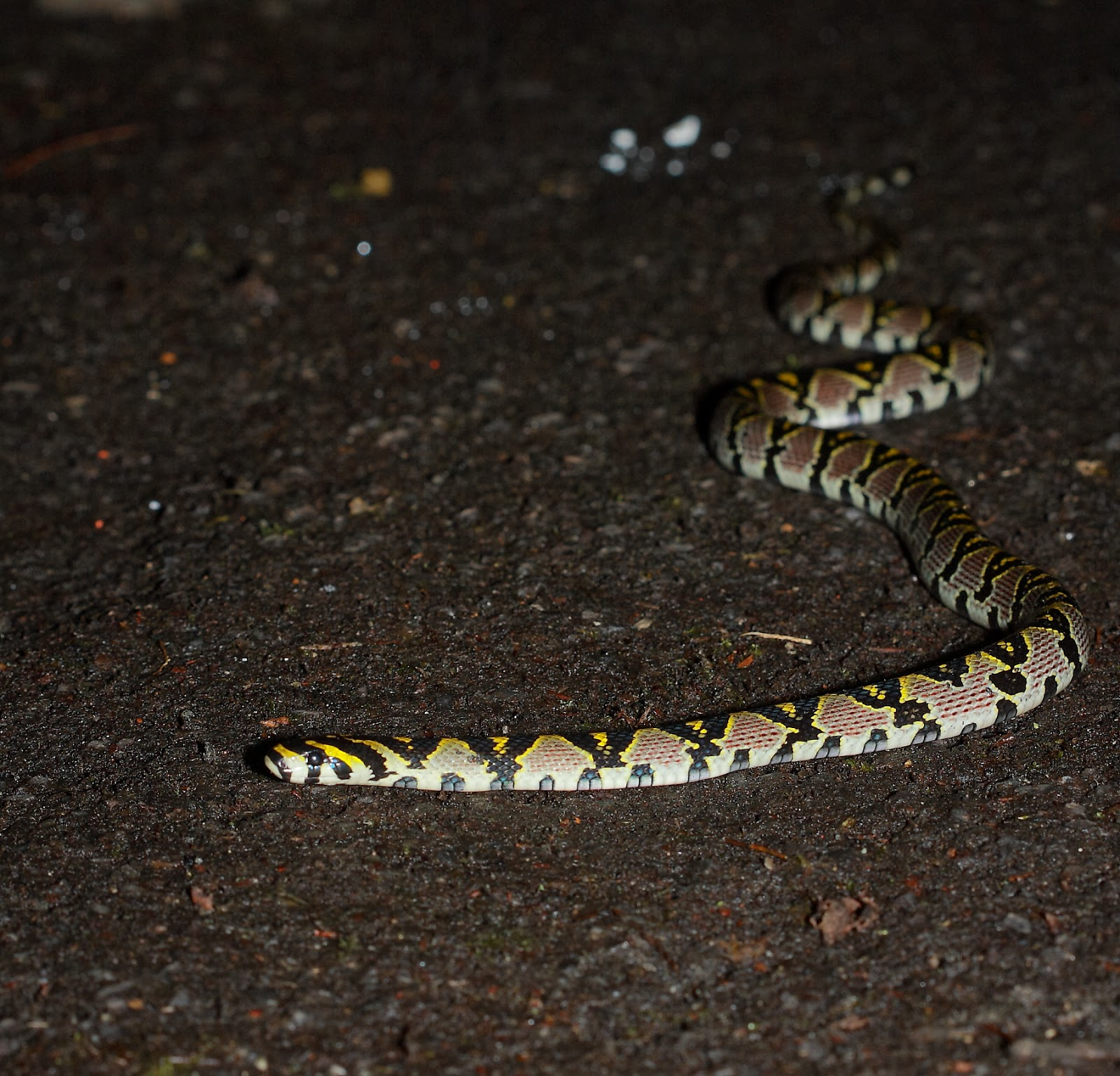 水田船歌 ‧ 琵鴨的生態敘事曲: 臺灣四大美蛇