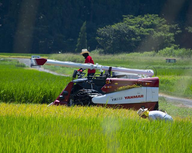 コンバインで稲を刈っている写真