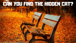 In these Eye Twisters Pictures Brainteasers, your challenge is to find the hidden animals in each puzzle image