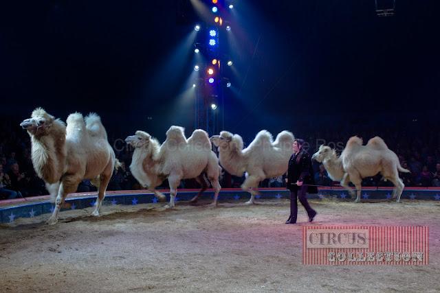 les chameaux de siberie