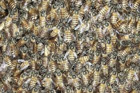 Hari Lebah Sedunia 2020