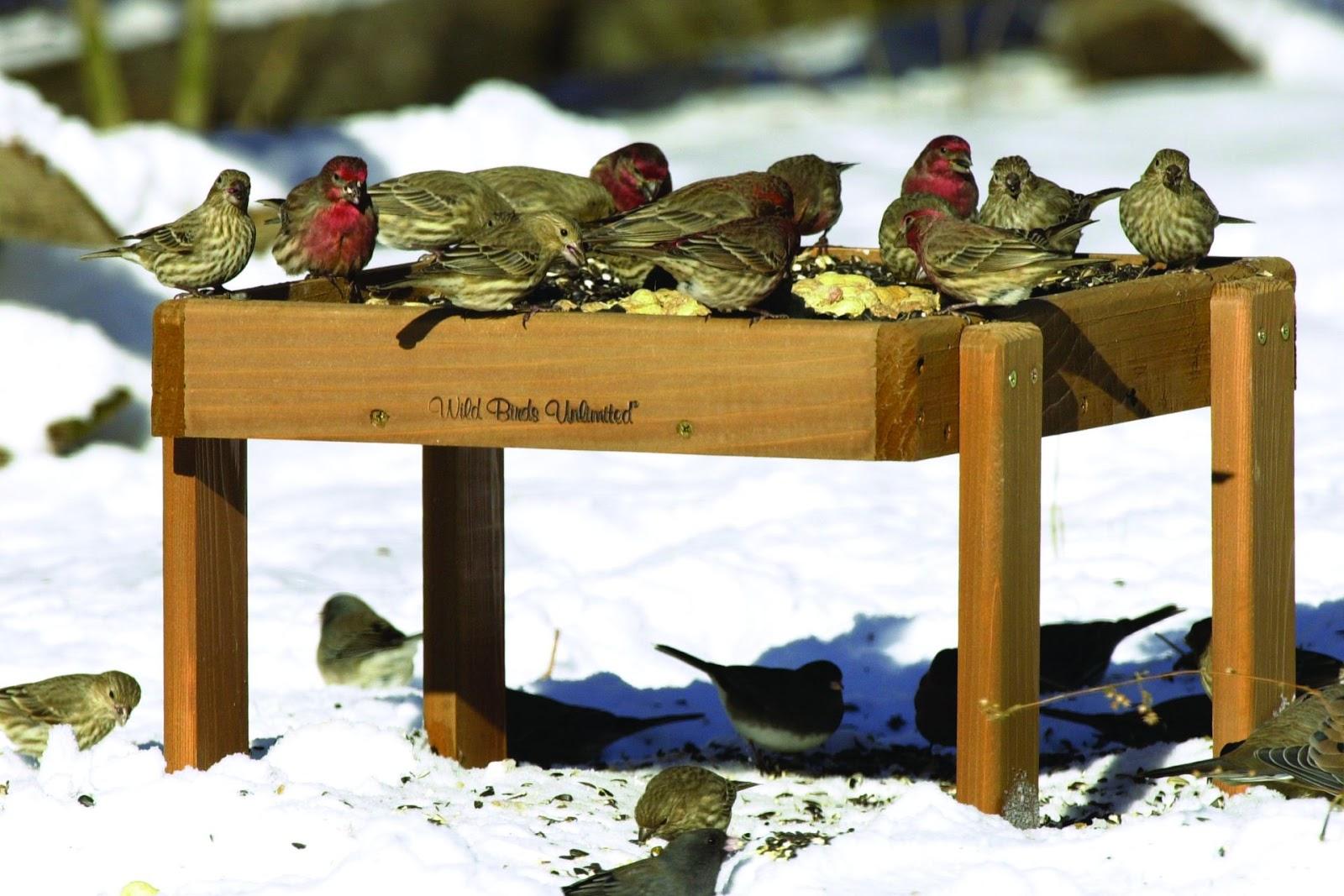 unlimited feeder id bird feeders media home facebook wild wildbirdsunlimitedhickorync birds