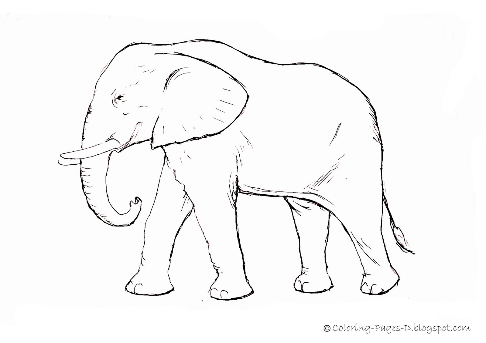 Elephant Face Coloring Page - Eskayalitim