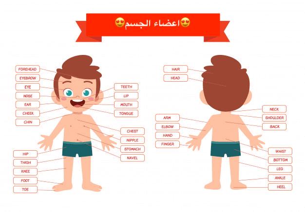تعلم كيف تتحدث عن جسم الانسان بالانجليزية
