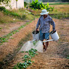 Perbedaan Pupuk Organik dengan Pupuk Non Organik Untuk Pertanian