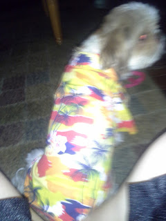 Micha Doggy Wear Hawiian Shirt Icicle