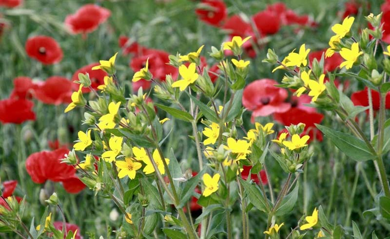 Plants, vegetable garden pest control, list of organic pesticides, natural bug repellent, best insecticide for vegetable garden