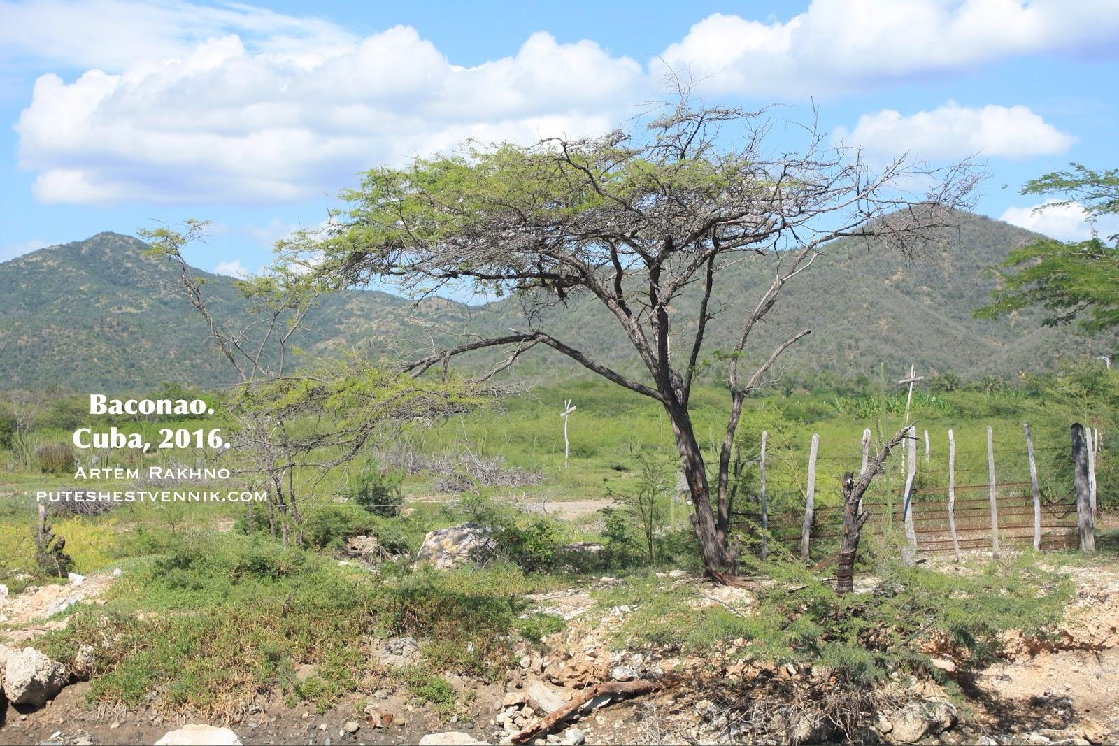 Дерево и горы в окрестностях Баконао