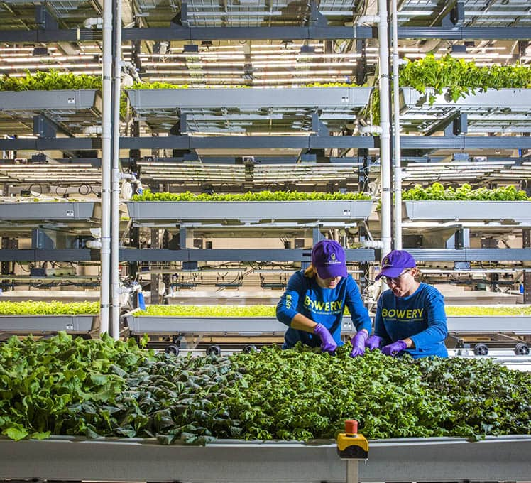 These Vertical farming companies making sustainable boom for better future