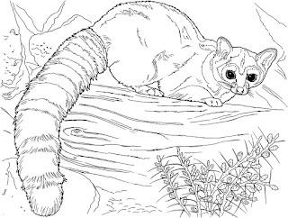 דפי צביעה מתוקים של בעלי חיים